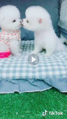 Animals Discover Ideas funny animals puppies pets for 2019 Cute Funny Animals Cute Baby Animals Funny Cute Animals And Pets Cute Cats Funny Happy Farm Animals Funny Babies Funny Dogs Baby Animals Super Cute, Cute Baby Dogs, Cute Little Puppies, Cute Little Animals, Cute Funny Animals, Funny Babies, Funny Dogs, Cute Puppies, Fluffy Puppies