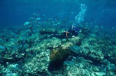 Searchers narrowing in on lost Dutch treasure ship off Western Australia