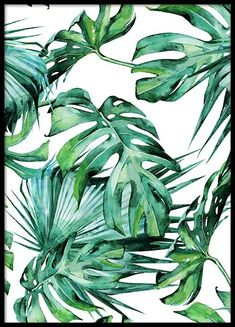 Tropical leaves pattern Poster in the group Posters & Prints / Illustrations at Desenio AB Tropical Leaves, Tropical Flowers, Tropical Plants, Kunst Poster, Jungle Pattern, Plant Illustration, Pattern Illustration, Gold Poster, Laptop Stickers