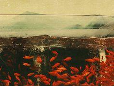 "Albarran Cabrera, ""Japan"", 2013, from series ""Krishna"""