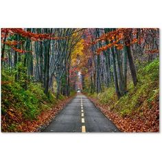 Trademark Fine Art Paths Canvas Art by CATeyes, Size: 12 x 19, Multicolor