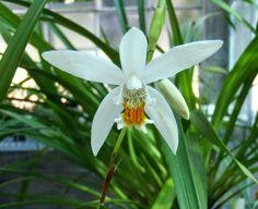 Aunque cada día son más populares y económica, las orquídeas siempre se han considerado un símbolo de distinción. Quizás porque nos llamaban mucho la atención las variedades tropicales.