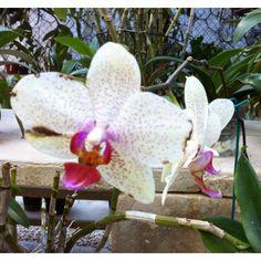 #Orchids.