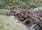 Salmonid Restoration Federation - engineered log jam or ELJ