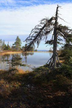 Riisitunturi national park, Posio Finland by Petri Tuovinen