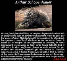 La Pensée Du Jour: Un troupeau de porc-épics ( Arthur Schopenhauer ...