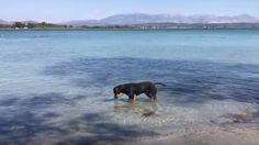 Πρέβεζα: Έγινε Viral και τρέλανε το διαδίκτυο ο Σκύλος που ψαρεύει στην Κυανή Ακτή