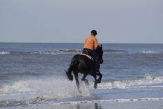 Paardrijden langs de Hollandse kust.