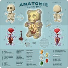 """""""Anatomie Gummi Bär"""" is a wonderful illustration by Jason Freeny detailing the anatomy of a Gummy Bear. Here's some of Jason's previous work we have Thoracic Vertebrae, Anatomy Models, Lego Man, Balloon Animals, Information Graphics, Gummy Bears, Cool Stuff, Funny Stuff, Tinkerbell"""
