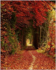 Take a walk in the autumn, where the leaves are magnetic in their colors. Red and orange. Colors of strength, perhaps...