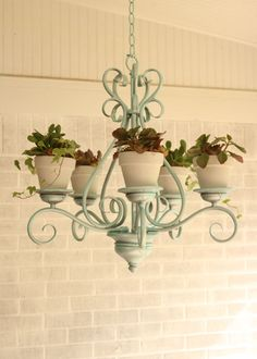 How to Repurpose a Chandelier for Succulents | Garden Club