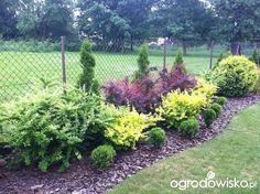 Trudny teren - dużo pracy! - strona 18 - Forum ogrodnicze - Ogrodowisko