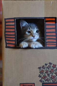 kitten in a window (box)