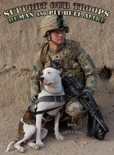 military dogs | Support our troops - human & pit bull alike