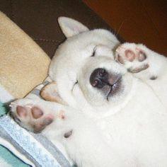ちゃーんと枕を使ってネンネするろりさな - @uminoriharu- #webstagram