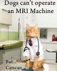 Dr. Meow will see you now