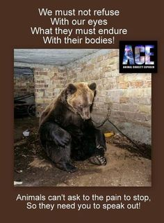 Dancing bears....This needs to stop. Tourists that pay for this, encourage this intelligent, poor animals inhumane suffering.....For entertainment!
