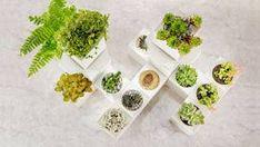 NASAが教える、自宅の空気がキレイになる「18の植物」   TABI LABO Nasa