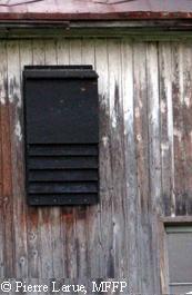 Installer un dortoir à chauves-souris   Chauves-souris aux abris