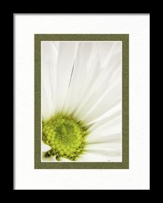Marnie Framed Print featuring the photograph Elegance by Marnie Patchett