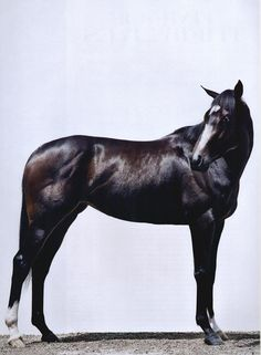 Rachel Alexandra earned the honor of being featured in Vogue magazine after her victory against males in the 2009 Preakness Stakes. She is still considered one of the best racehorses of all time. All The Pretty Horses, Beautiful Horses, Animals Beautiful, Sport Of Kings, Majestic Horse, Thoroughbred Horse, Racehorse, Horse Pictures, Horse Photography