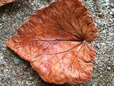 Harvest rhubarb leaf. Build mound of dirt; cover w/ piece of plastic (dry cleaner/painter's).  Mix QUIK-RETE concrete/mortar to a thick but wet consistency.  Place leaf face down on the plastic on mound. Cover backside of leaf w/ mortar.  If you want the leaf to sit like a platter when complete, make a flat spot in concrete.  Let leaf cure for ~a  wk. Rinse natural leaf off mortar w/ a power washer or w/ a soft used toothbrush & some water.  Let dry. Stain leaf w/~3 coats of concrete stain.