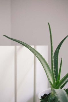 Easy ways to declutter your home with the konmari method and checklist. Check out our decluttering system to get a clutter free home Aloe Barbadensis Miller, Declutter Your Home, Organizing Your Home, Organizing Tips, Plantas Indoor, Avocado Dessert, Clutter Free Home, Best Indoor Plants, Succulent Care