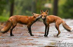 A love kiss!