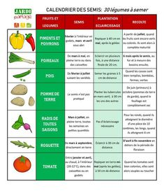 Sowing calendar 30 vegetables to sow Gardening
