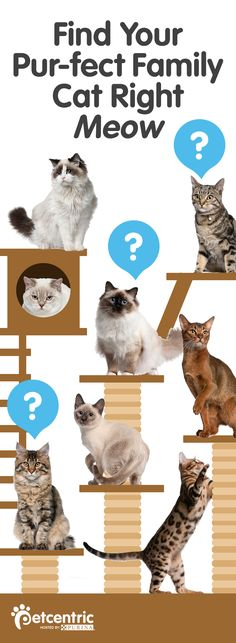 Adopting a cat and don't know where to begin? Visit Petcentric.com for all the information you need to find the cat breed that best fits your family's personality and needs!