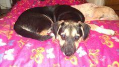Sam 4 month old