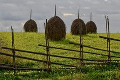 Elonkierto Jokioinen Fields, Safari, Grass, Landscapes, Paisajes, Scenery, Grasses, Herb