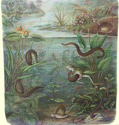 Bloedzuigers:   (deze werden vroeger vaak als weerprofeet in een glas gehouden)  Zuigen zich boven water vast, mooi weer.  Liggen stil op het water, mooi weer. Zuigen zich vast en slaan met de staart, storm. Liggen stil op de bodem, regen.