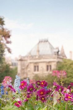 Flowers at Notre Dame
