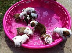 puppy pool