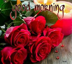 Good Morning greetings....happy day.