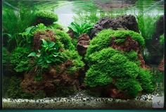 Seems like tumblr is gaining popularity among aquascapers; meet Roman Holba