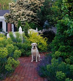 20 Tips For Gardening With Dogs  We love our dogs and our gardens, but sometimes it seems the two don't mix well. Here are 20 simple tips for balancing the needs of pets and plants