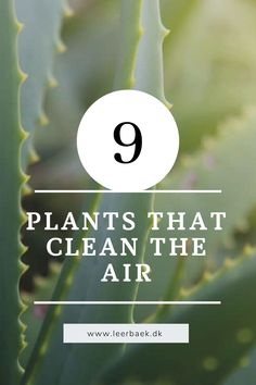Read more about the best air purifying plants here on my plant blog Best Air Purifying Plants, Air Purifier, Read More, Did You Know, Knowing You, Cleaning, Blog, Blogging, Home Cleaning