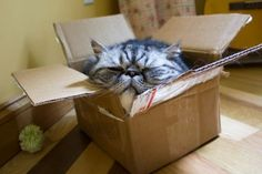 It's My Cat In a Box  Tons of cats find their way into boxes. It seems like cardboard boxes are a natural safe haven for animals. But this g...