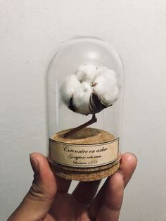 Globe fleur de coton Gossypium arboreum / Cabinet de curiosités / Naturalisme Classic Cabinets, Collections Of Objects, Cabinet Of Curiosities, Mini Greenhouse, The Bell Jar, Painting Cabinets, Dried Flowers, Snow Globes, Diy And Crafts