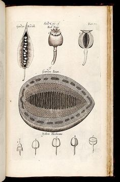 Nehemiah Grew | The Anatomy of Plants (1682)