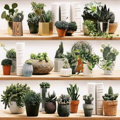 This is WALLPAPER ! Stylized cacti on shelves by KOZIEL for cactus lovers Cacman and TusGirl We are the cactus family 🌵 spreading Love is Our mission💞 Sharing our story as comics to let you know that true love exists❤️ Hanging Planters, Diy Hanging, Planter Pots, Cactus Vert, Succulents In Containers, Cactus Y Suculentas, Rubber Tree, Fashion Room, Garden Pots