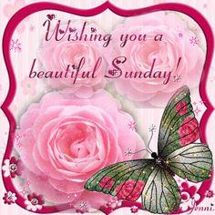 Wishing you a beautiful Sunday day pink rose days of the week sunday sunday greeting sunday gif beautiful sunday