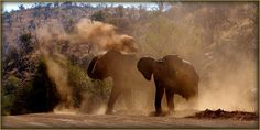 Pilanesberg National Park, day tour safari from Johannesburg to explore the big five African bush. Experience African wildlife on safari Big 5, Day Tours, South Africa, Safari, National Parks, Wildlife, Elephant, African, Explore