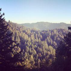 #ShareIG Morning walk:) #natureinspires #keepcreating #katetarganmusic #katetarganmusic2015