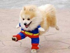 super dog! found on google search
