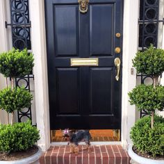 Lucy love #yorkie #curbappeal