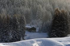 A cold november - white larchs by frost and first snow