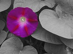 Add a touch of color to a B photo using Photoshop Elements 11.  Awesome effect and easy to do!